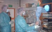 Artroskopická operace koně