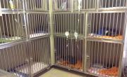 Hospitalizace - malá zvířata